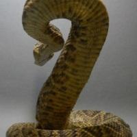 snakeoilc1-1c.jpg