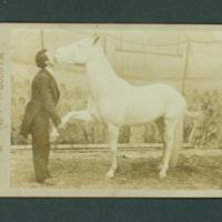 Mascot the Talking Horse photograph