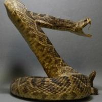 snakeoilc1-1b.jpg